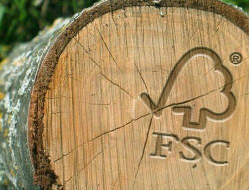 Cuidamos la naturaleza: FSC y PEFC para conservar el medio ambiente