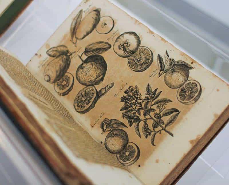 botanicas bombas gens