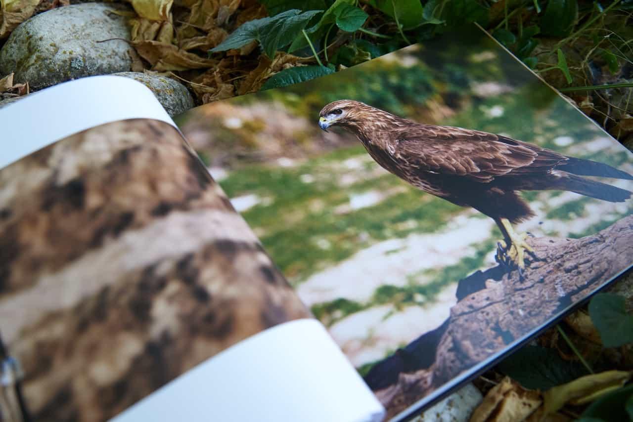 interior del libro de fauna y senderismo de Alcoy