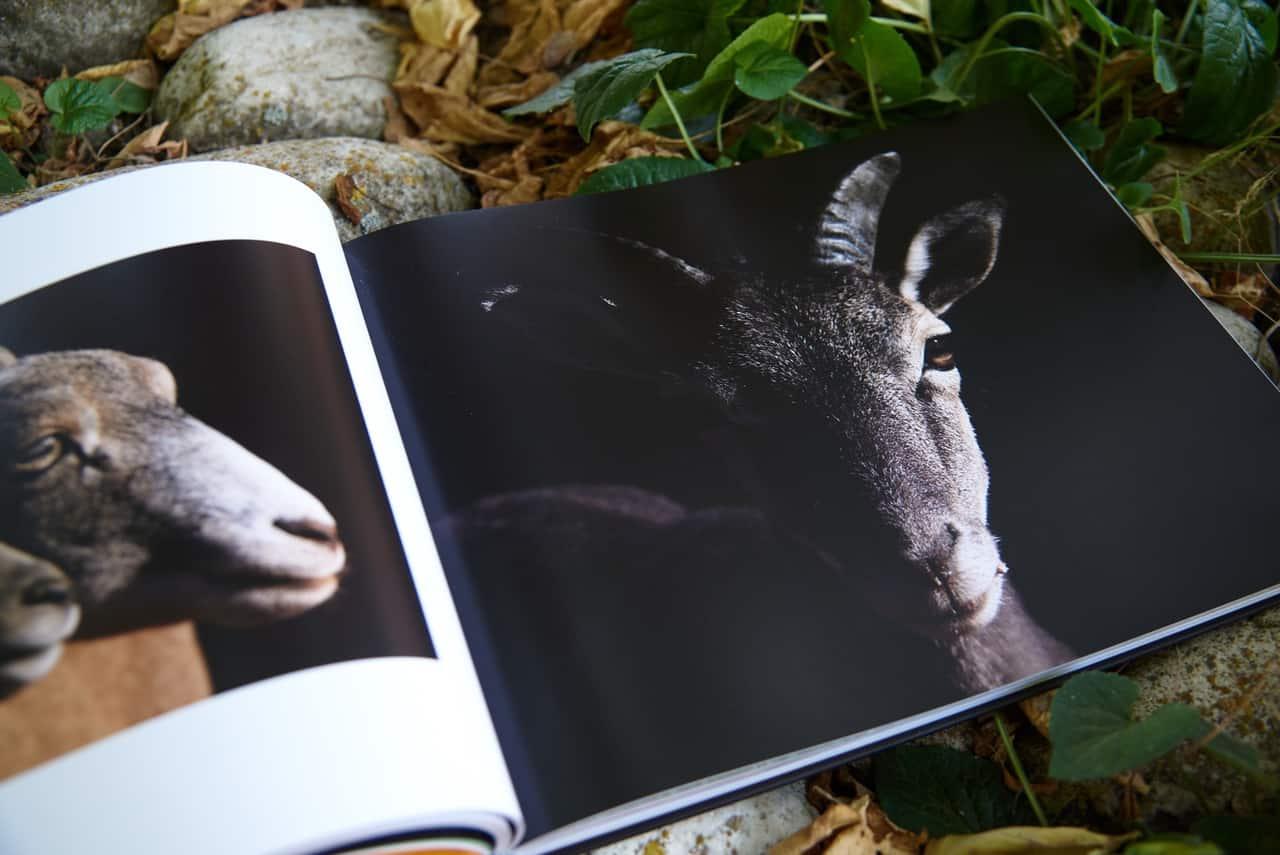 Página del libro Huellas y Sendas